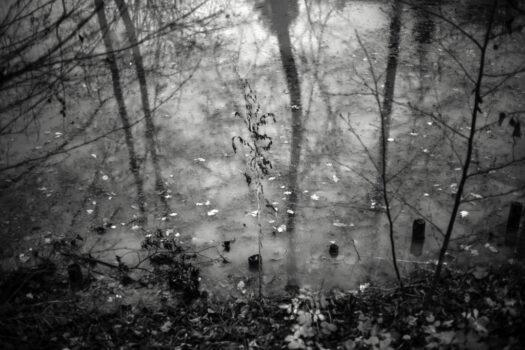 "Jan Thau Foto ""the last one standing"" 2015"