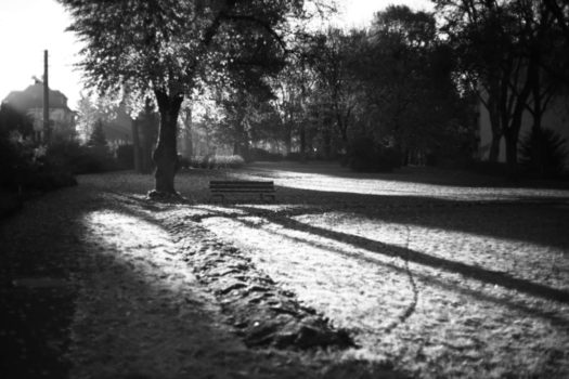 "Jan Thau Foto ""Morning in the Park"""