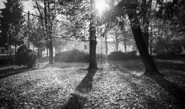 "Jan Thau Foto ""Sun in the Park"""