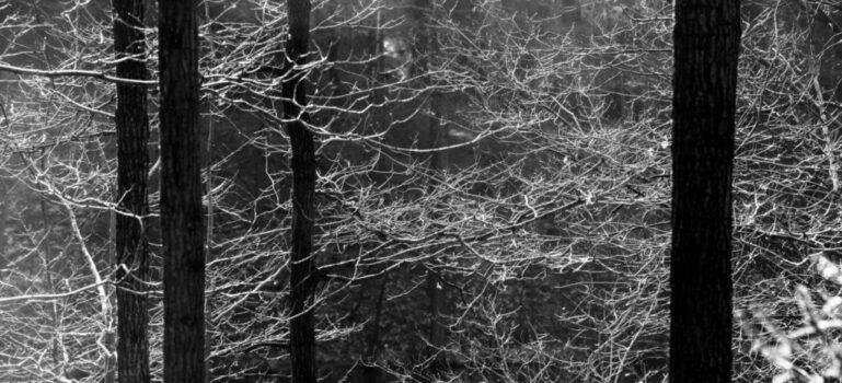 Jan Thau Foto Spidertree